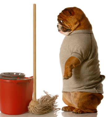 Pet Urine Stains and Odour Removal